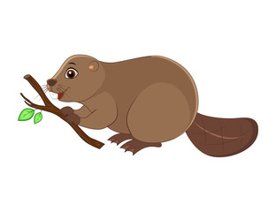 Cute cartoon  beaver vector illustration isolated on white background