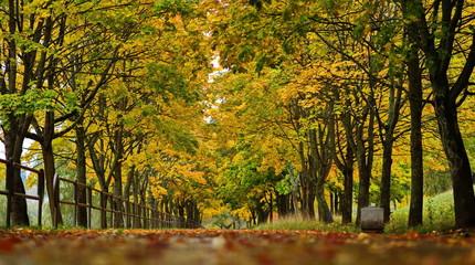 autumn alley background