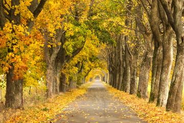 Autumn Road. /Kashubia, Poland