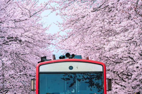 Wall mural Cherry blossom or Sakura and trian in spring at Jinhae, South Korea.