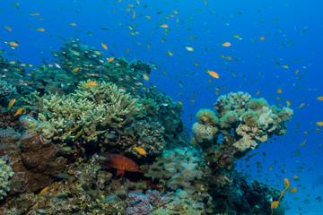 Bunte Korallenlandschaft