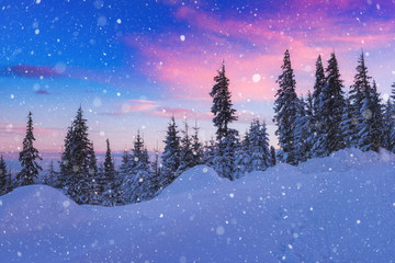 Winter fairytale landscape, beautiful sunset during snowfall in the mountain snowy christmas tree forest