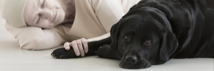 Black dog assistant on floor