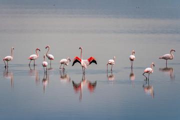 Foto op Canvas Flamingo beautiful light on pink flamingo group