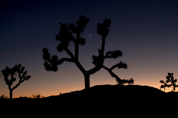 Dreamy Sunset with Silhouetted Joshua Trees