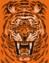furious tiger face, detailed sketch art