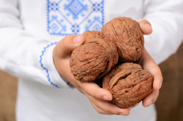 The children's hand holds walnuts. The concept of healthy food