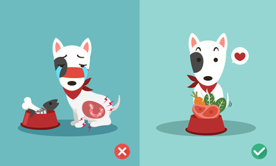 right and wrong ways to feed dogs,illustration