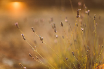 plants at sunset