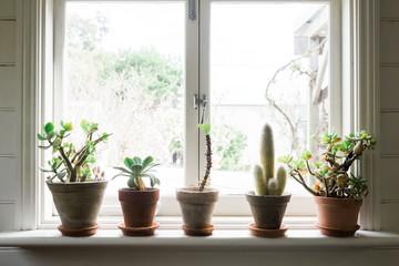 Row of Cacti on Window ledge