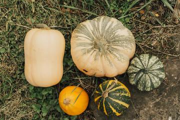 Various fresh pumpkins