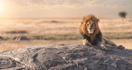 Foto auf Leinwand Löwe A male lion is sitting on the top of the rock in Serengeti nation park,Tanzania