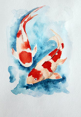 Two carp koi in water
