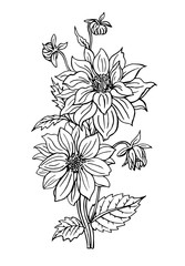 Dahlia with stalk, buds and leaves, outline black and white drawing.