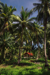 Small house in the palm grove