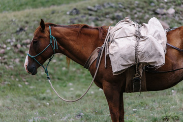 Horse with canvas and leather pack on trail