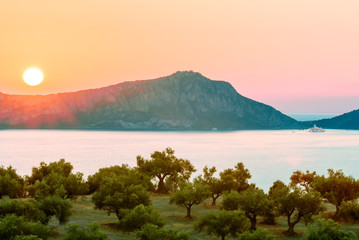 The views of olive groves on the Mediterranean sea during sunset