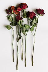 Dried red roses on a white background