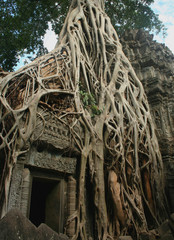 So called Tomb raider gate covered by roots of a strangler fig (Ficus sp.) at the Ta Prohm temple in Angkor area, Cambodia.  Ta Prohm used as a location in the film Tomb Raider.