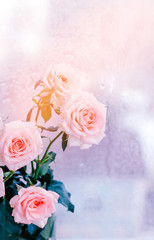 bouquet of pink roses, romantic flowers, copy space, concept of Valentine day