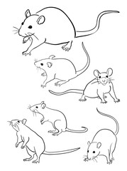 Mice line art 05. Good use for symbol, logo, web icon, mascot, sign, or any design you want.