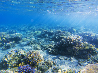 Sunshine on coral reef. Exotic island shore shallow water. Tropical seashore landscape underwater photo.