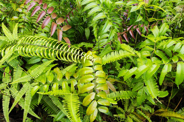 Tropical greenery top view closeup photo. Tropical foliage with green fern leaf