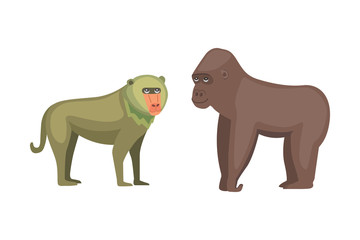Baboon monkey and gorilla cartoon illustration. Wildlife of africa.