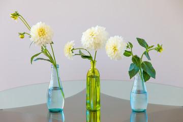 Set of white dahlia flowers in glass vases.