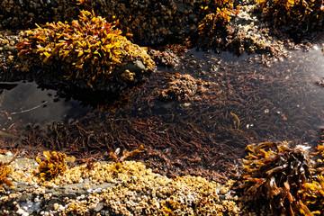 Tide Pools, Tofino, British Columbia, Canada