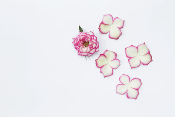 Beautiful pink rose flower arrangement with space on white background