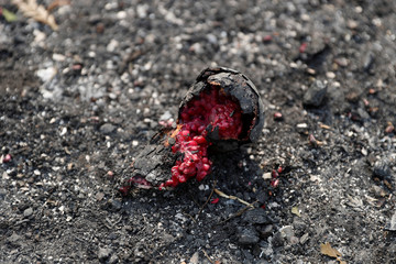 A charred pomegranate is seen at a home destroyed by the Tubbs Fire in Santa Rosa, California