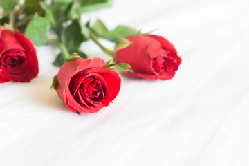 Closeup red rose on white bed background, love and romantic feeling concept