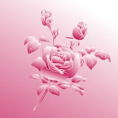 Pink rose on pink background.