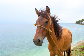 Red horse and blue sea view. Travel photo. Horse head portrait. Lovely farm animal.
