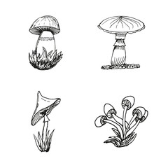 Mushrooms in hand drawn style for creative design. Vector illustration