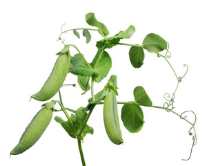 three ripe pea pods with green leaves on white