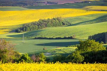 Green summer landscape scenic view