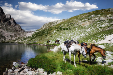 eco-friendly active tourism tour with horses in the mountains of Maritime Alps National Park (Lake of Fremamorta, Italy)
