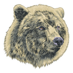 bear sketch head vector graphics color picture