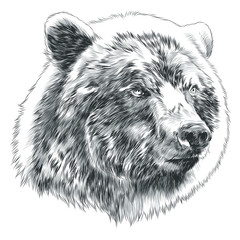 bear sketch head vector graphics in black-and-white monochrome pattern
