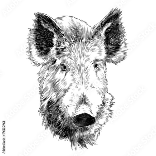 quotboar head sketch vector graphics monochrome blackand