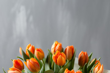 Beautiful orange and yellow tulips on gray wall. Flower background. Warm colors. copy space