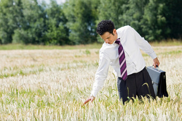 businessman in cornfield