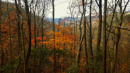 Hiking trail thru the woods in Tennessee's Great Smoky Mountains