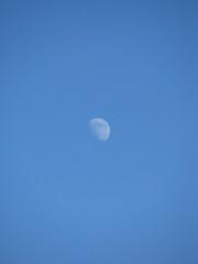 Half white moon during daylight