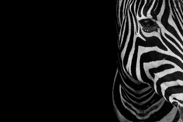 Foto auf Leinwand Zebra portrait of zebra. Black and white version.