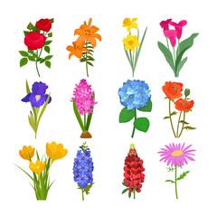 Beautiful watercolor flower botanical bloom painting handmade summer branch petal decoration bouquet nature design vector illustration