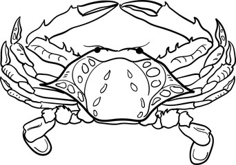 Contour black and white crab vector illustration. Hand-drawn ocean inhabitant for coloring book and other.