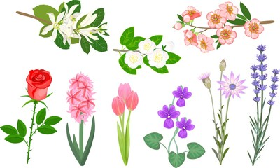Set of popular garden flowers and branches of beautifully flowering shrubs on a white background